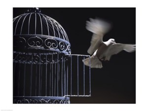 white dove and cage